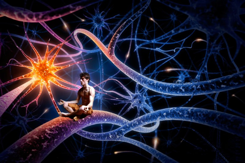 Resultado de imagen de hay que concluir diciendo que no existen pruebas suficientes para poder limitar los correlatos neuronales de la conciencia al menos del cerebro completo