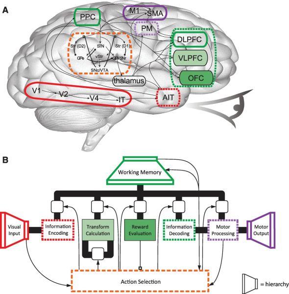 Spaun Cerebro artificial