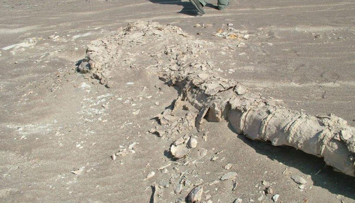 Encuentran en Perú los restos de un ave de hace 35 millones de años 3