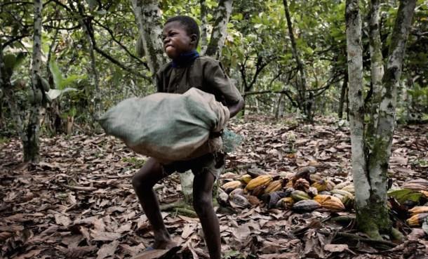 Otro ejemplo de los trabajos forzados que se practican en las plantaciones. Fuente: Confectionerynews