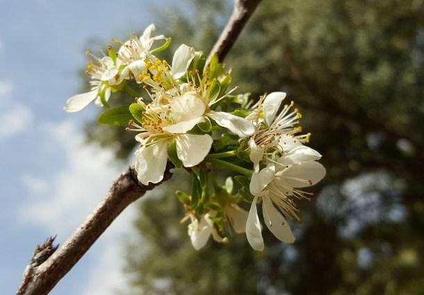 Galaxy S6 Edge Foto 06 macro flor